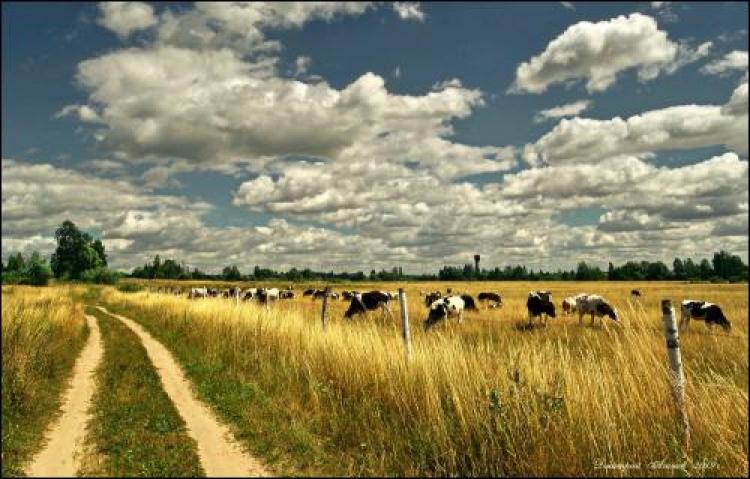 Фотоконкурс «Панорама природы»