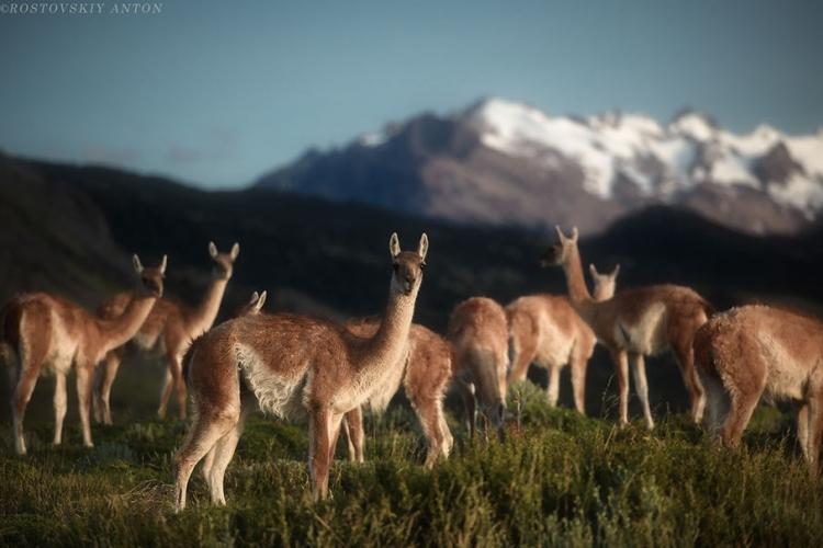 Фототур в Патагонию