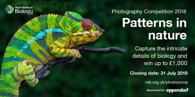 Фотоконкурс «Узоры в природе»