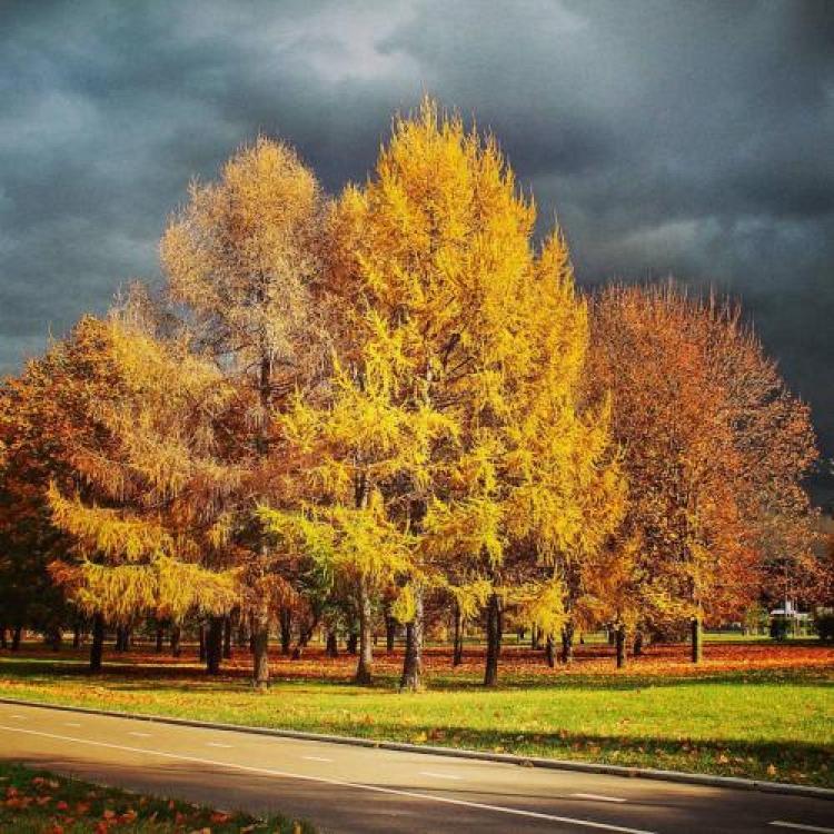 Фотоконкурс «Пейзажная осень»