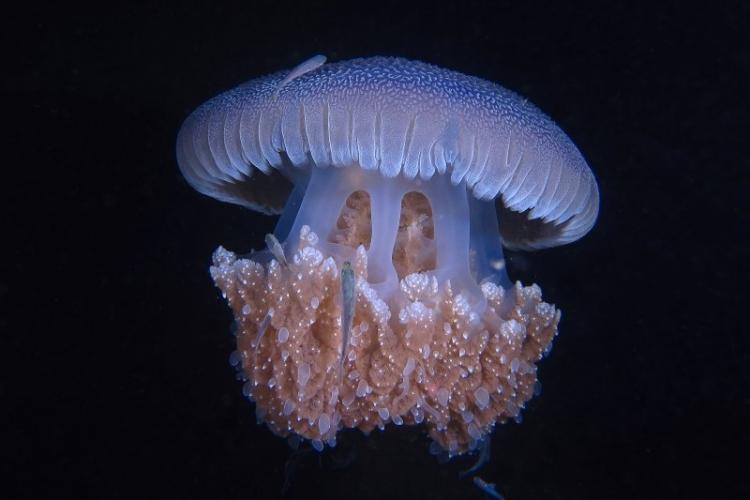 V Фестиваль подводной фотографии «Дикий подводный мир»