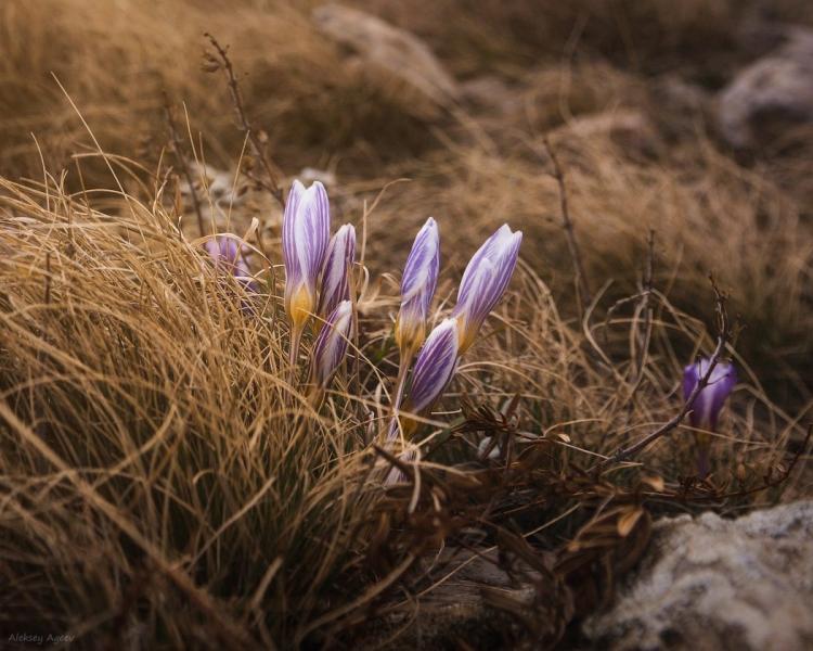 Фототур «Крымские первоцветы»