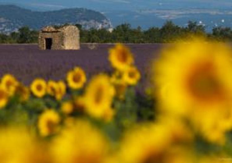 Фототур «Франция: цветущий Прованс»
