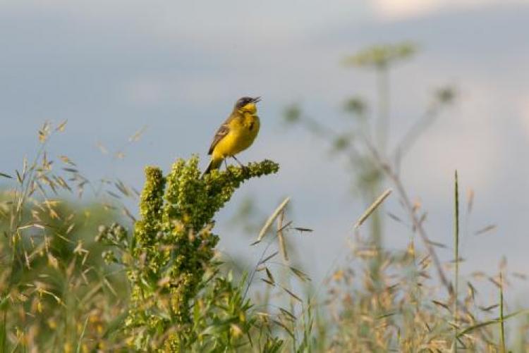Фотоконкурс «Птицы летом»