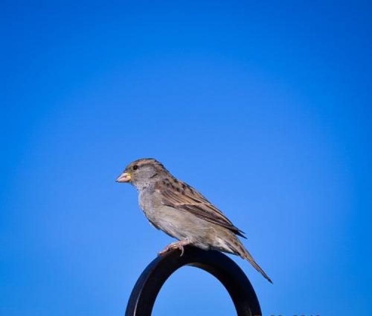 Фотоконкурс «Прелестные птицы»