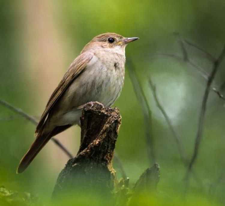 Фотоконкурс «Маленькая птичка»