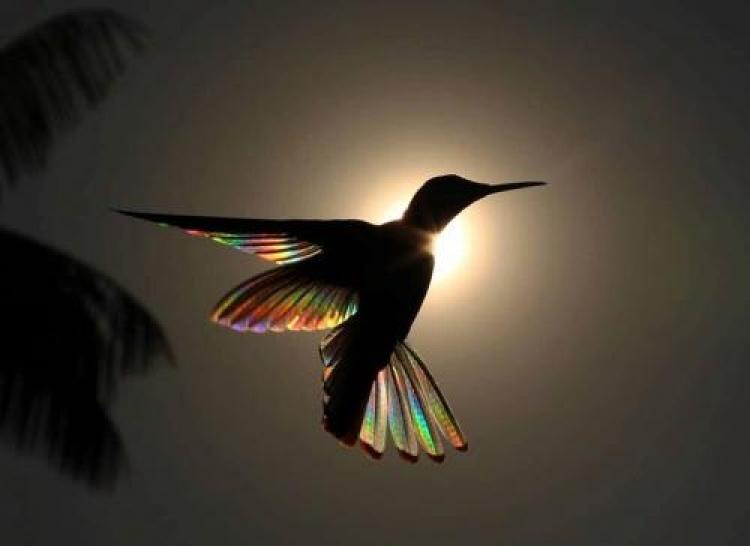 Фотоконкурс «Фотографии красивых птиц»