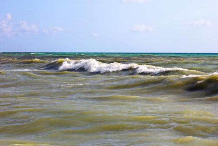 Фотоконкурс «Морская пучина»