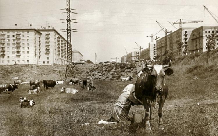 Выставка «Россия. ХХ век в фотографиях. 1946-1964 гг.»