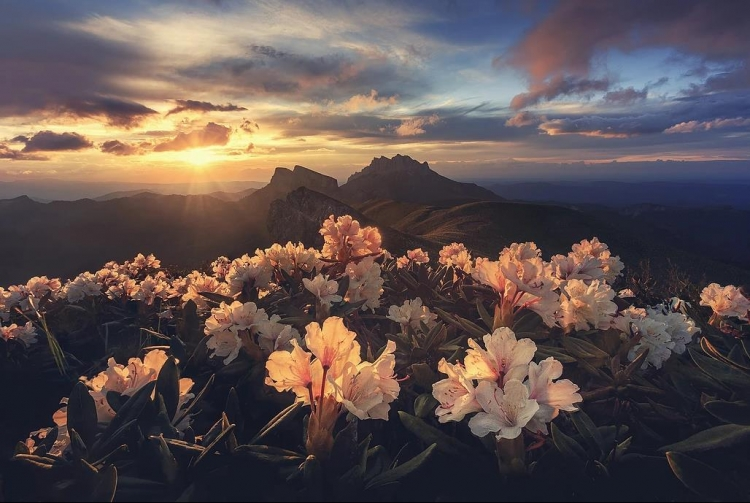 Фототур «Рододендроны Большого Тхача»
