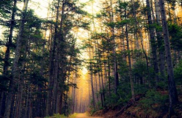 Фотоконкурс «Сказочный лес»
