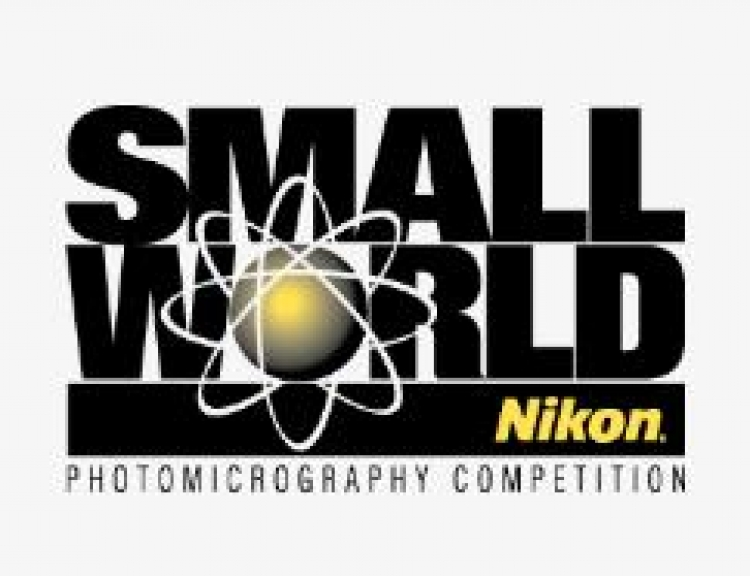 Международный фотоконкурс Nikon Small World 2019