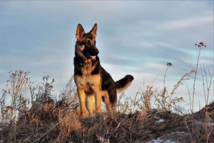 Фотоконкурс «Собаки»