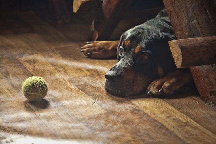 Фотоконкурс «Собачья жизнь»