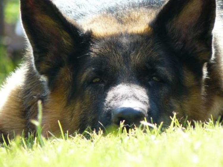 Фотоконкурс «Красивые собаки»