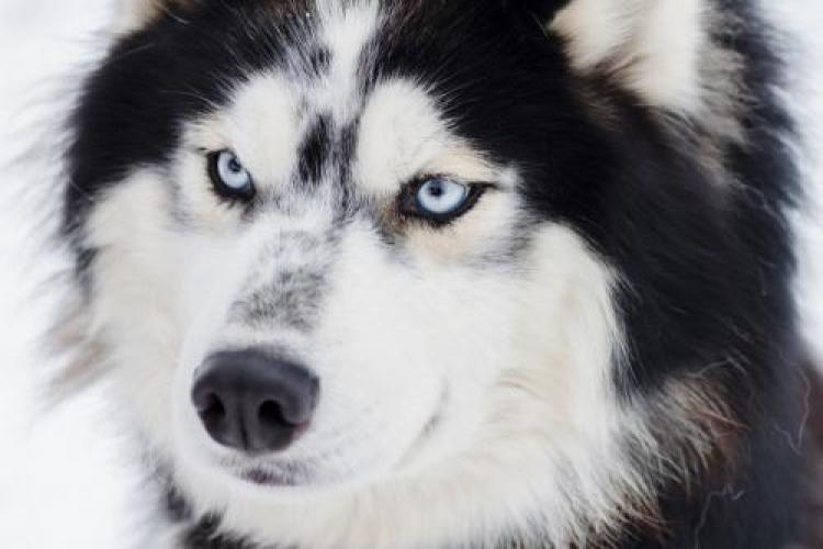 Фотоконкурс «Красивая собака»