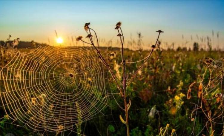 Фотоконкурс «Красивое утро»