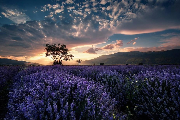 Фототур «Лавандовые поля Болгарии»