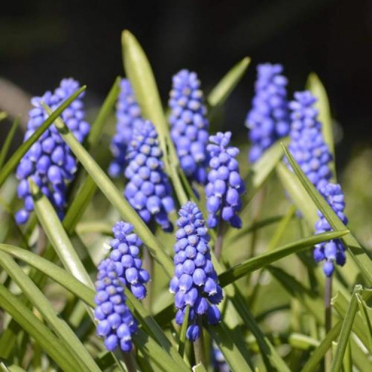 Фотоконкурс «Цветы, цветущие весной»