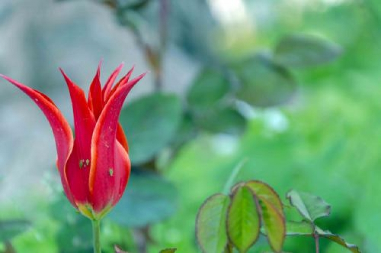Фотоконкурс «Весенние цветы»