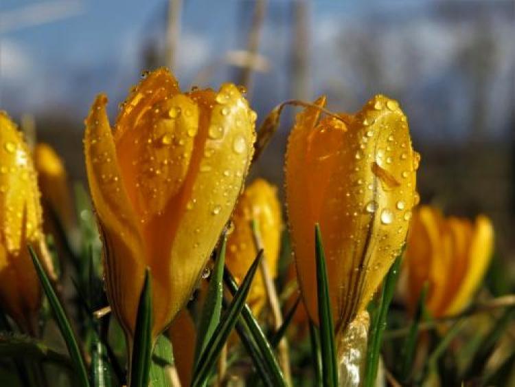 Фотоконкурс «Макросъёмка весны»