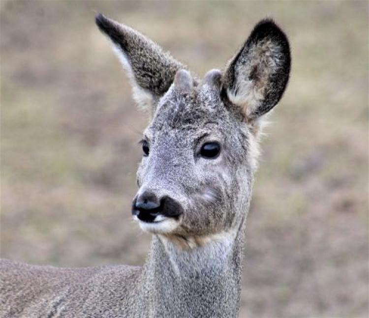 Фотоконкурс «Виды животных»