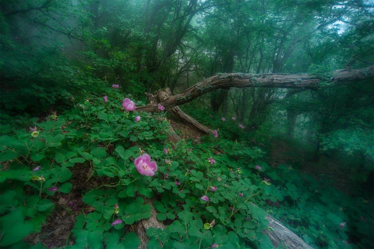 Фототур «Цвета южного берега»