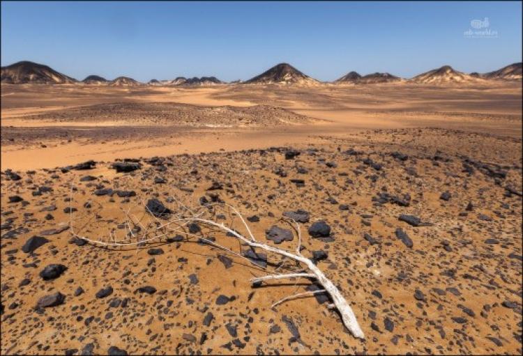 Экспедиция в Западную пустыню