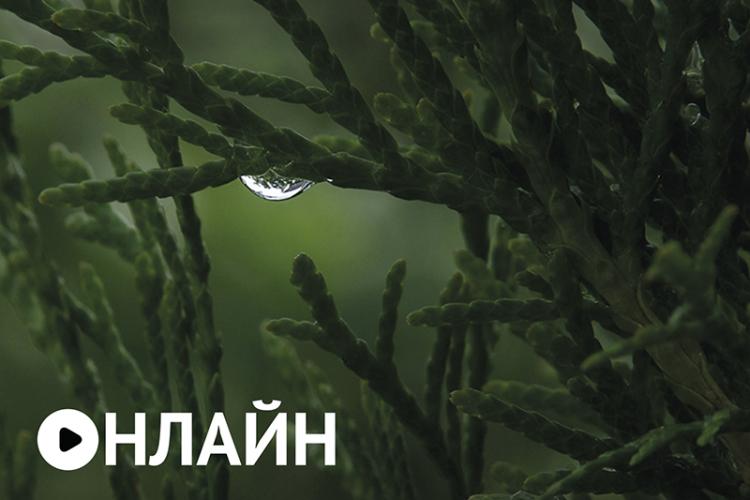 Онлайн-выставка Анатолия Жовинского «Макро- или фитоформы»