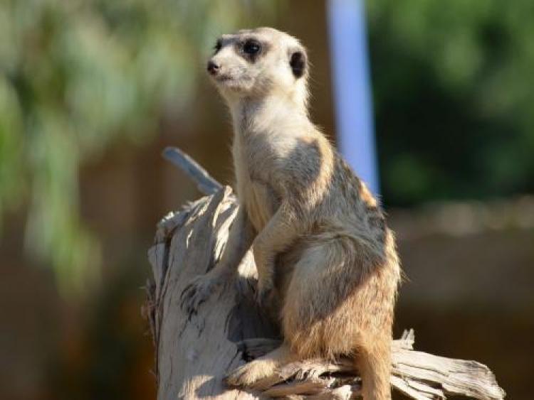 Фотоконкурс «Животные мира»