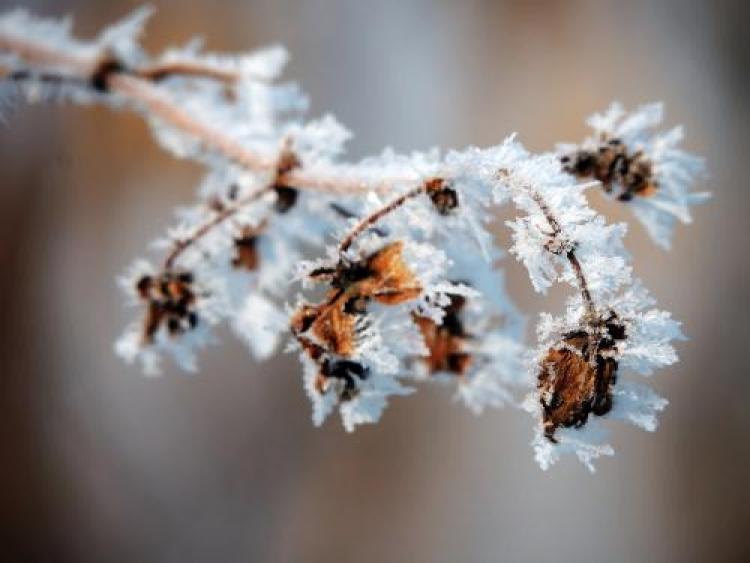 Фотоконкурс «Зимний макромир»