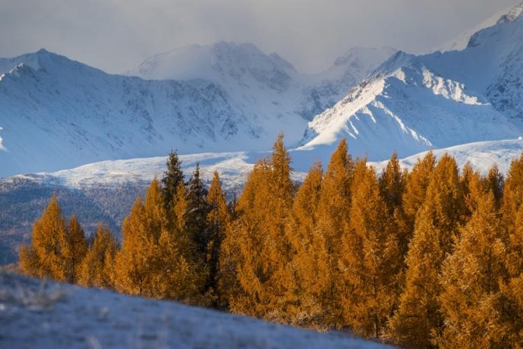 Фототур «Алтай. Горы золота»