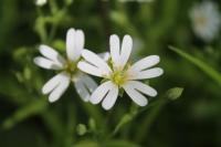 Фотоконкурс «Первые цветочки»