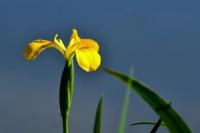 Фотоконкурс «Фотографии цветов»