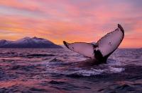 Фототур в Гренландию «Диско Бэй»