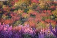 Фототур «Цветущий персик — Крым»