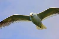 Фотоконкурс «Птицы вокруг нас»