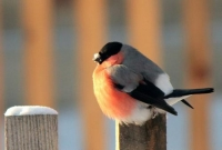 Фотоконкурс «Птичка— невеличка»